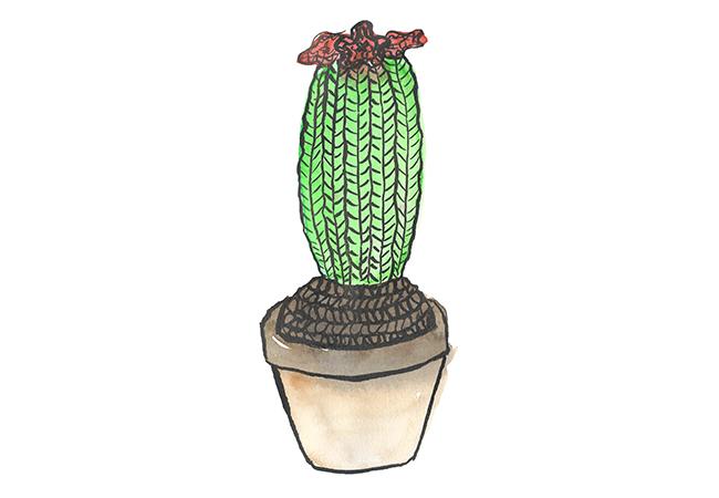 Cactus–gebreid