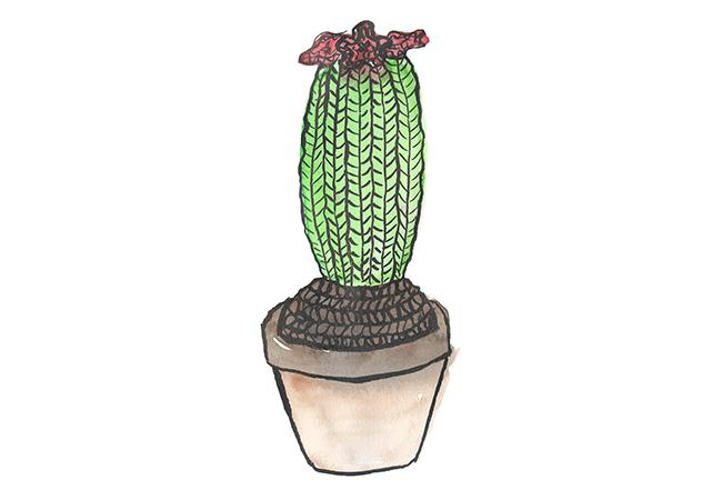 Cactus-gebreid